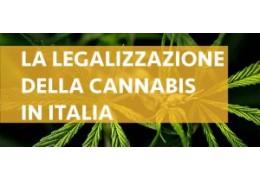 Ultime novità riguardo la legalizzazione della cannabis in Italia